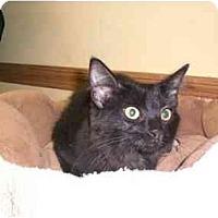 Adopt A Pet :: Pumpkin - Lombard, IL