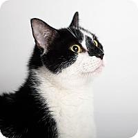 Adopt A Pet :: Nibbles - Rockaway, NJ