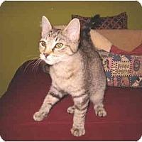 Adopt A Pet :: Crispix - Colmar, PA