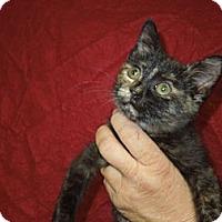 Adopt A Pet :: Fallon - Medina, OH