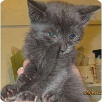 Adopt A Pet :: Misty - Catasauqua, PA