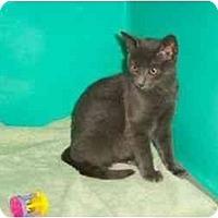 Adopt A Pet :: Clark - Secaucus, NJ
