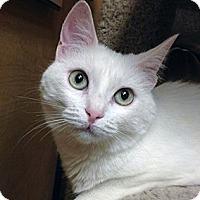 Adopt A Pet :: Snowflake - Irvine, CA