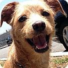 Adopt A Pet :: HARRISON (video)