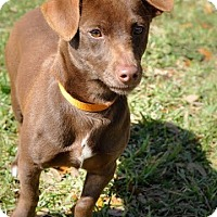 Adopt A Pet :: Perry - Gainesville, FL