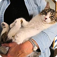 Adopt A Pet :: Reggie - Davis, CA