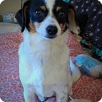 Adopt A Pet :: Brantley-adoption pending - Mississauga, ON