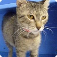 Adopt A Pet :: Porshe - Hamburg, NY