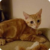 Adopt A Pet :: .Skipper - Baltimore, MD