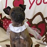 Adopt A Pet :: Mocha - Groton, MA
