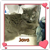 Adopt A Pet :: Java - New Richmond,, WI