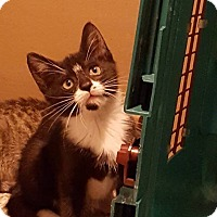 Adopt A Pet :: Spot - East Brunswick, NJ