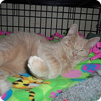 Adopt A Pet :: LEO - Medford, WI