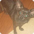 Adopt A Pet :: Vivian's Pup - Lillian