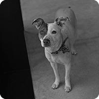 Adopt A Pet :: Malory - San Antonio, TX