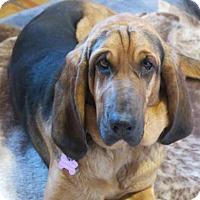 Adopt A Pet :: Sklar - Simcoe, ON