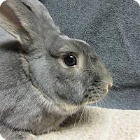 Adopt A Pet :: Darien - Newport, DE