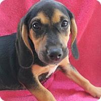 Adopt A Pet :: Anabel's pup URANIA - Tampa, FL