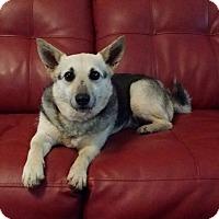 Adopt A Pet :: Carly - Lawrenceville, GA