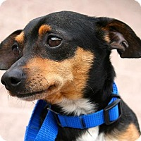 Adopt A Pet :: Ricky - Erwin, TN