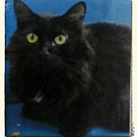 Adopt A Pet :: Minxy - Trevose, PA