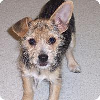 Adopt A Pet :: Tinker - CONOVER, NC