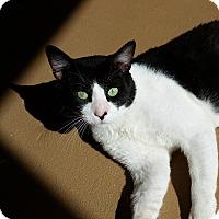 Adopt A Pet :: Tony - Chula Vista, CA