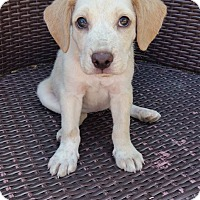 Adopt A Pet :: Liberty - New Oxford, PA