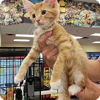Adopt A Pet :: Sunny - Monrovia, CA