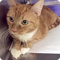 Adopt A Pet :: Andi Kiki - Gilbert, AZ