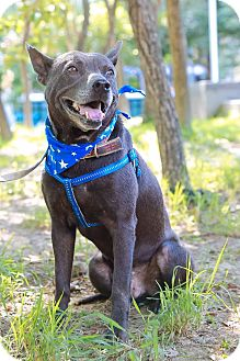 Labrador Retriever Mix Dog for adoption in Castro Valley, California - Asa