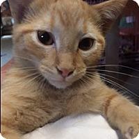 Adopt A Pet :: Pierre - Rochester, MN