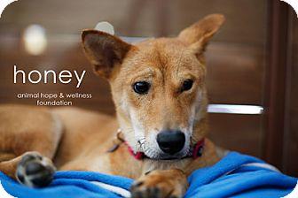 Jindo Mix Dog for adoption in Sherman Oaks, California - Honey
