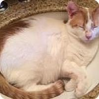 Adopt A Pet :: Gretchen - San Carlos, CA