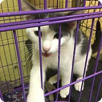 Adopt A Pet :: Penny - Richboro, PA