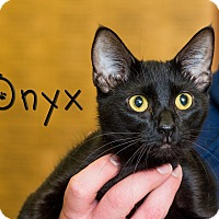 Adopt A Pet :: Onyx - Somerset, PA