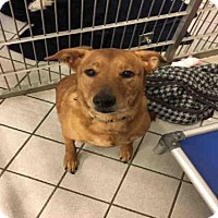 Adopt A Pet :: DIXIE - Canfield, OH