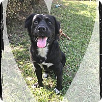 Adopt A Pet :: Hunter - Royal Palm Beach, FL