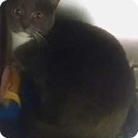 Adopt A Pet :: SHARON - Gloucester, VA