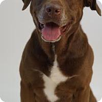 Adopt A Pet :: Luann - Reno, NV