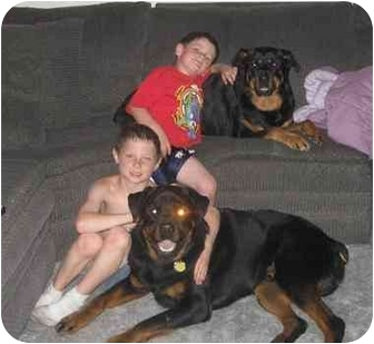 Rottweiler Dog for adoption in Chandler, Indiana - Baby