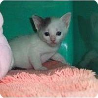 Adopt A Pet :: Colleen - Secaucus, NJ