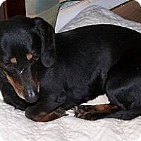 Adopt A Pet :: Rosey - San Angelo, TX