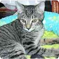 Adopt A Pet :: Nicky - Arlington, VA