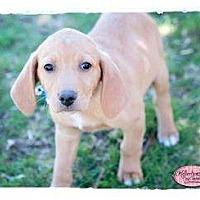 Adopt A Pet :: Noah - Haverhill, MA