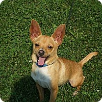 Adopt A Pet :: Maverick - Upper Sandusky, OH