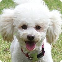 Adopt A Pet :: Kami - La Costa, CA