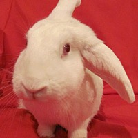Florida White Mix for adoption in Williston, Florida - Sweetness