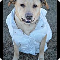 Adopt A Pet :: Charlize - Millersville, MD