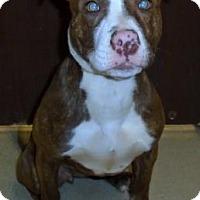 Adopt A Pet :: Rosie - Gary, IN